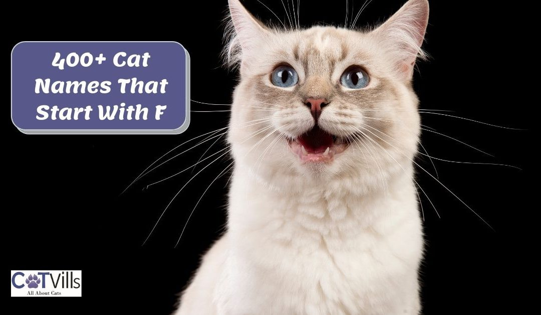 400+ Fantastic Cat Names that Starting With F