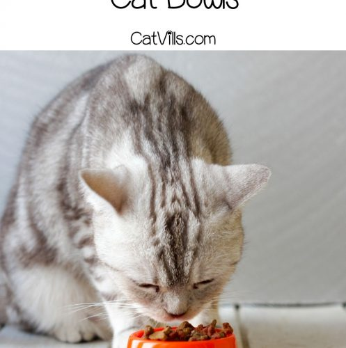 cat eating using best slow feeder bowls