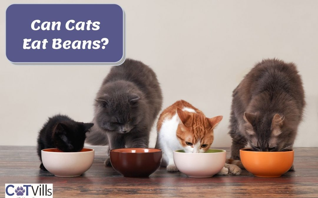 Can Cats Have Beans? Is it Safe for Them?