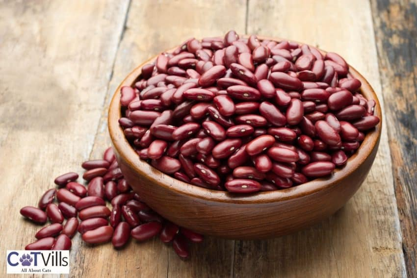 beans in a wooden bowl; can cats eat beans?