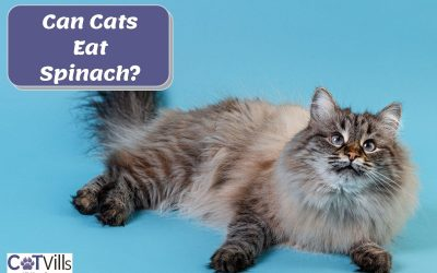 Is Spinach Safe or Bad for Cats?