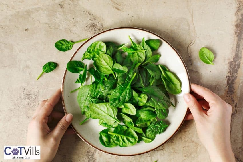 spinach leaves in a ceramic plate