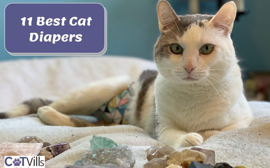 Top 11 Diapers for Cats for 2021