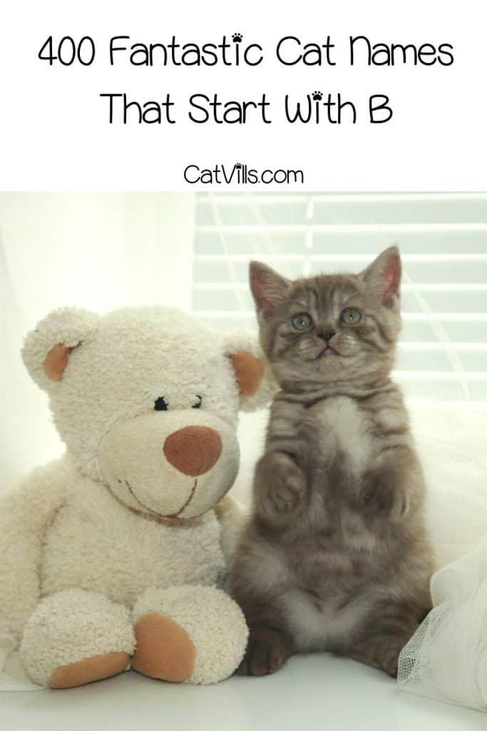 happy kitten beside his teddy bear