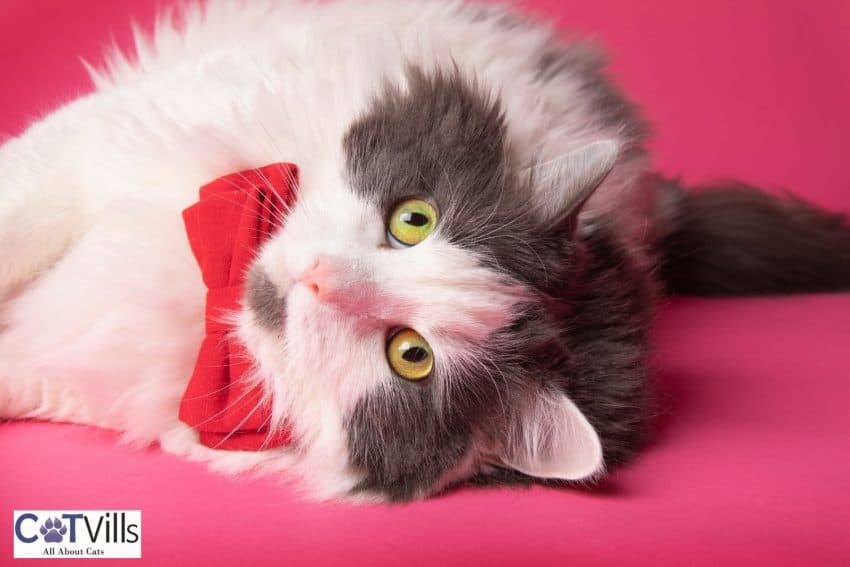 cute kitty with red ribbon