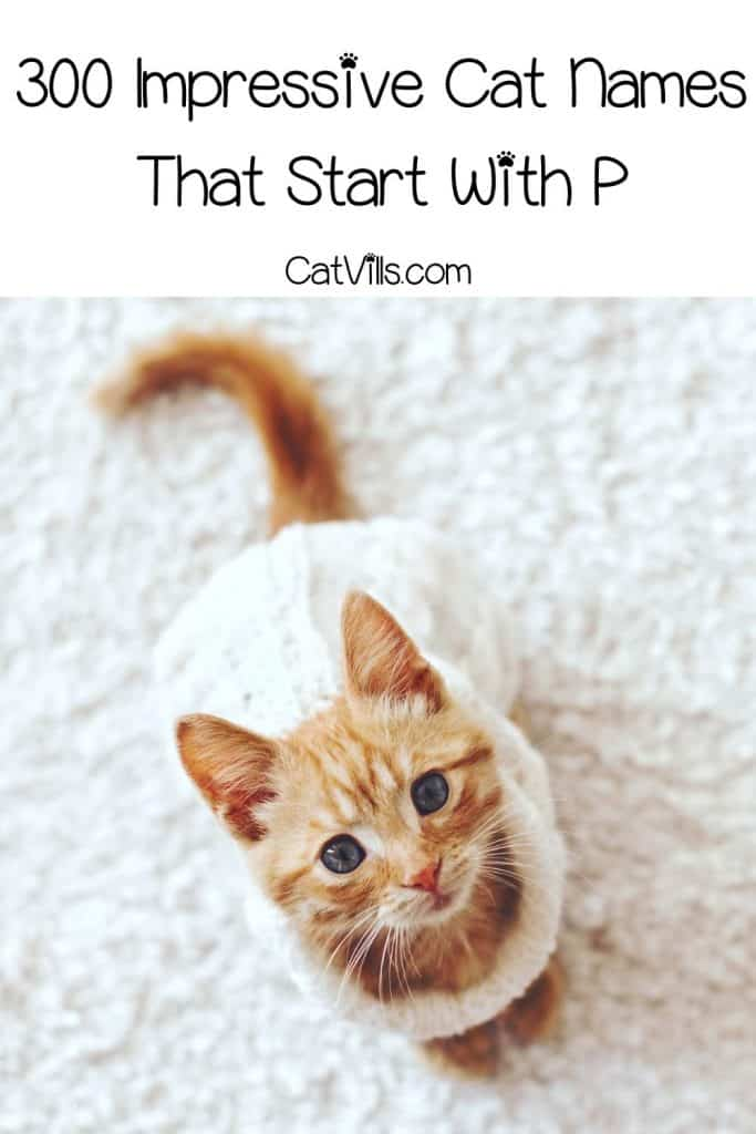 cute kitten with white dress