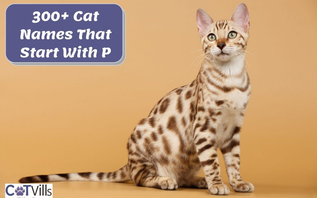 """300+ Impressive cat names Starting with """"P"""""""
