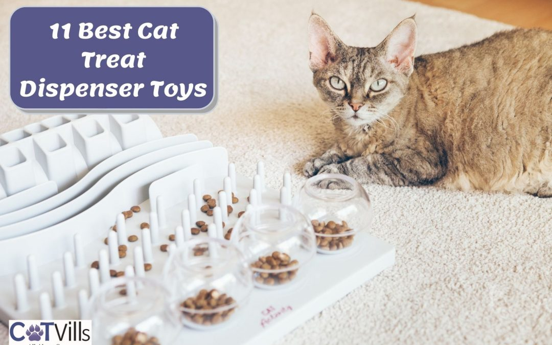 Top 11 Food Dispensing Toys for Cats in 2021