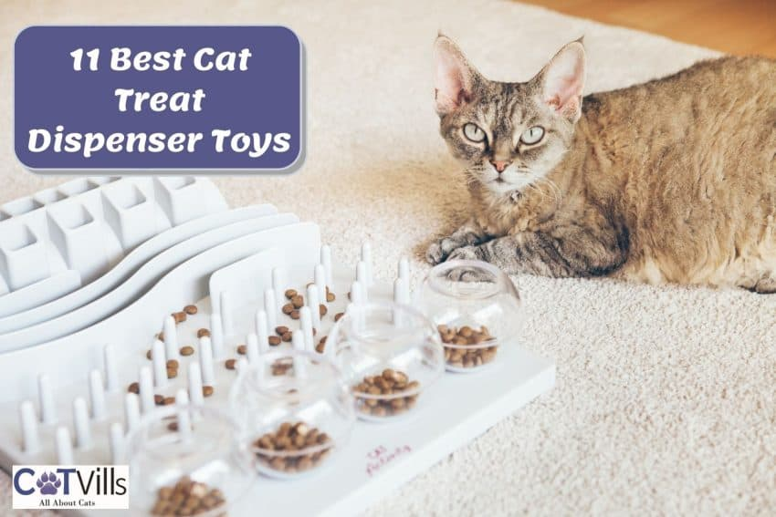 cat sitting beside the Trixie cat treat dispenser toys