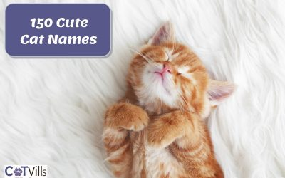 150+ Cute Cat Names for Boys and Girls