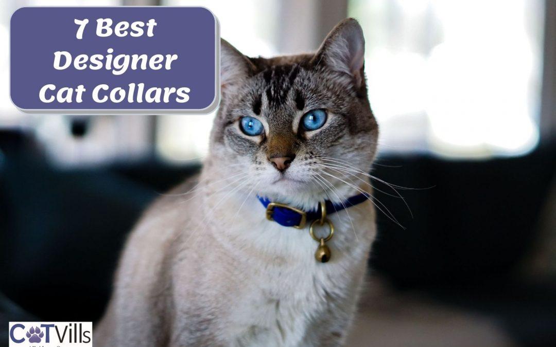 7 Fancy Cat Collars for Your Kitties to Buy in 2021