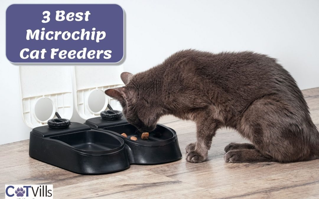 Top 3 Microchip Activated Cat Feeders for 2021