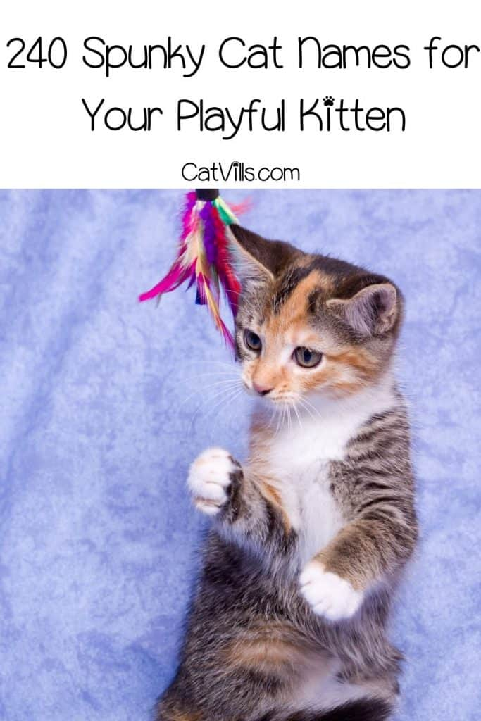 kitten playing a colorful toy