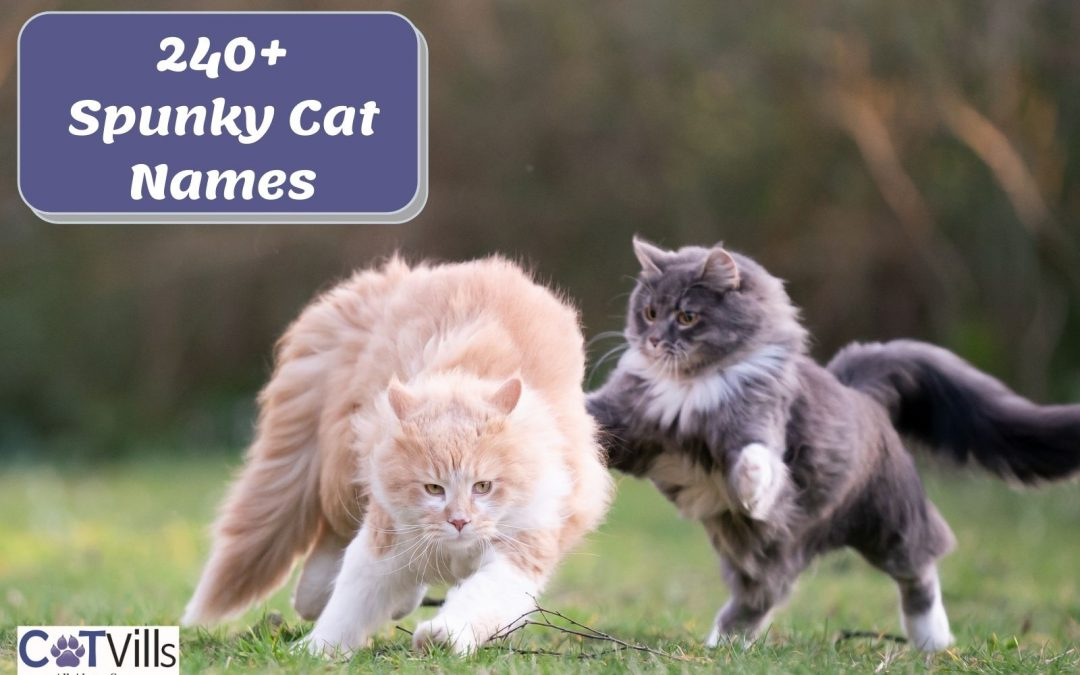 Spunky Cat Names for Your Playful Kitten