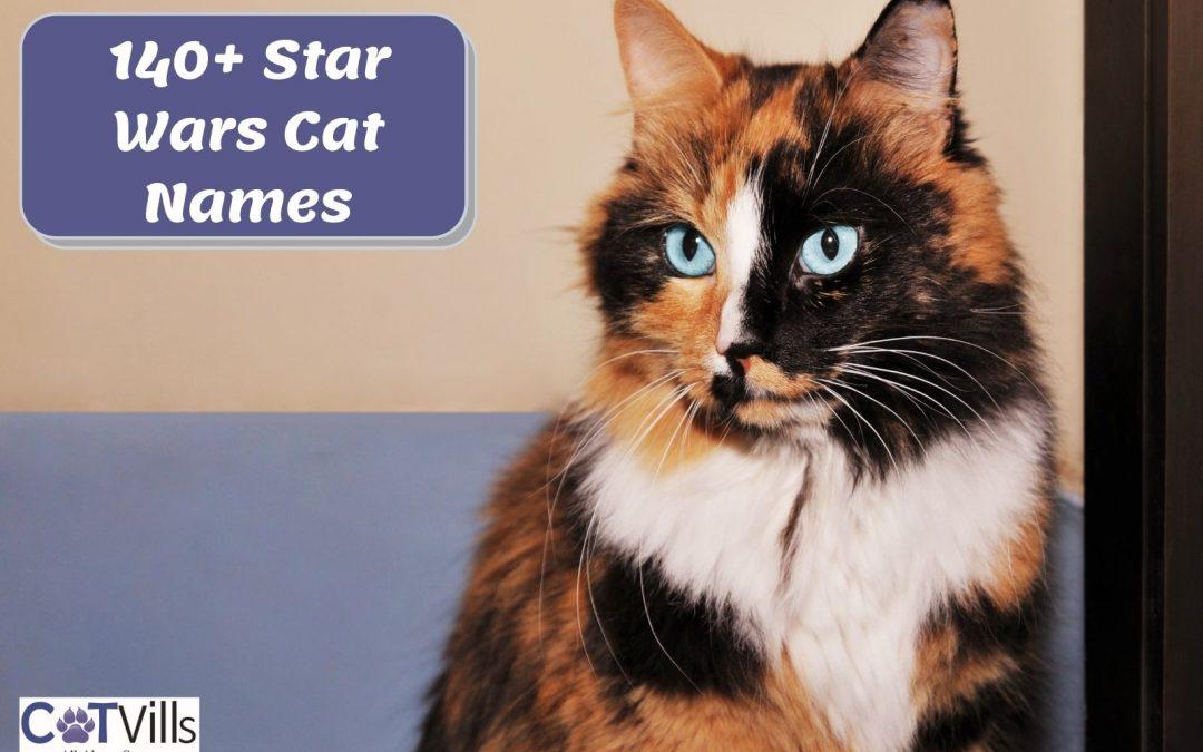 170+ Marvelous Star Wars Cat Names