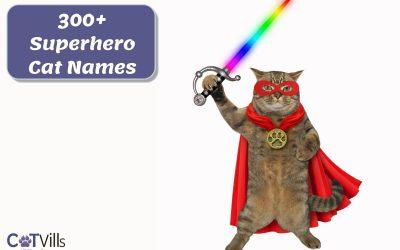 Superhero-Inspired Cat Names: 300 Ideas