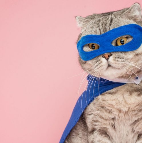 pretty cat with blue cape and shades