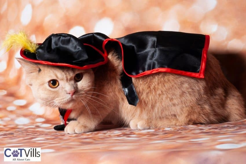 cat with black cape and hat