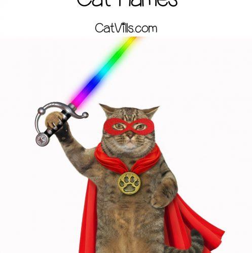brave superhero cat