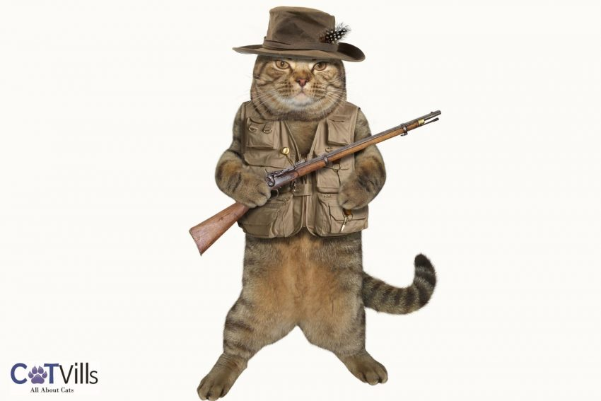 villain cat dressed with a hat holding a gun suitable for villain cat names