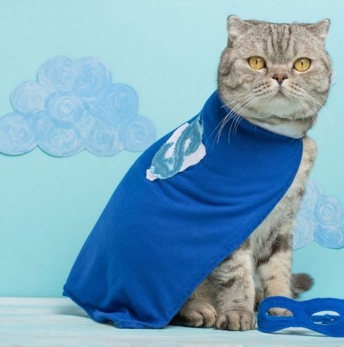 a cat wearing superhero costume perfect for superhero cat names