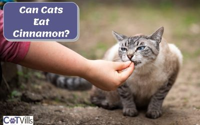Can Cats Have Cinnamon or Is It Bad for Them?