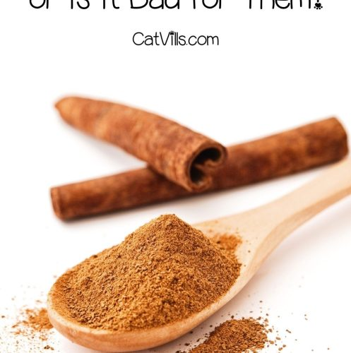 powdered cinnamon on a wooden spoon