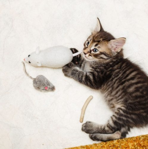 kitten playing with her cat chew toys