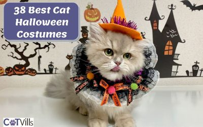 38 Spooky Halloween Costumes for Your Cats This 2021