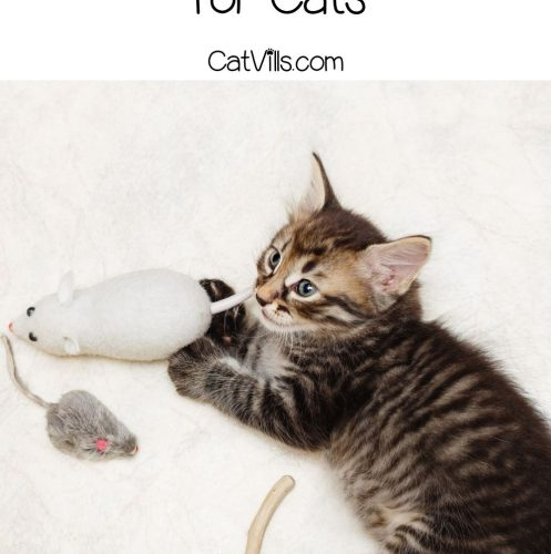 kitten chewing chew toys for cats