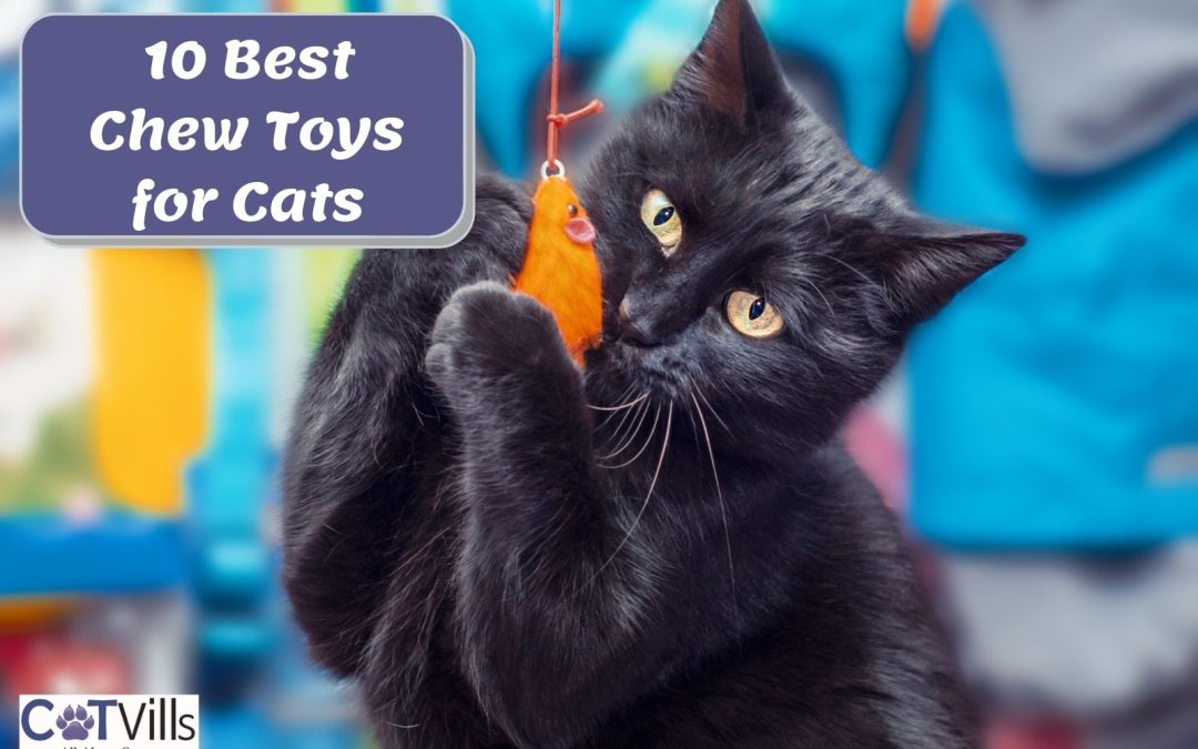 Chew Toys for Cats: Top 10 Choices in 2021