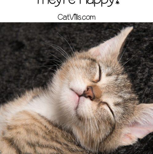 a happy kitten so do cats smile?