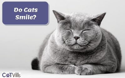Do Cats Smile When They Are Happy?