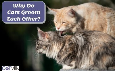 4 Reasons Why Cats Clean Each Other